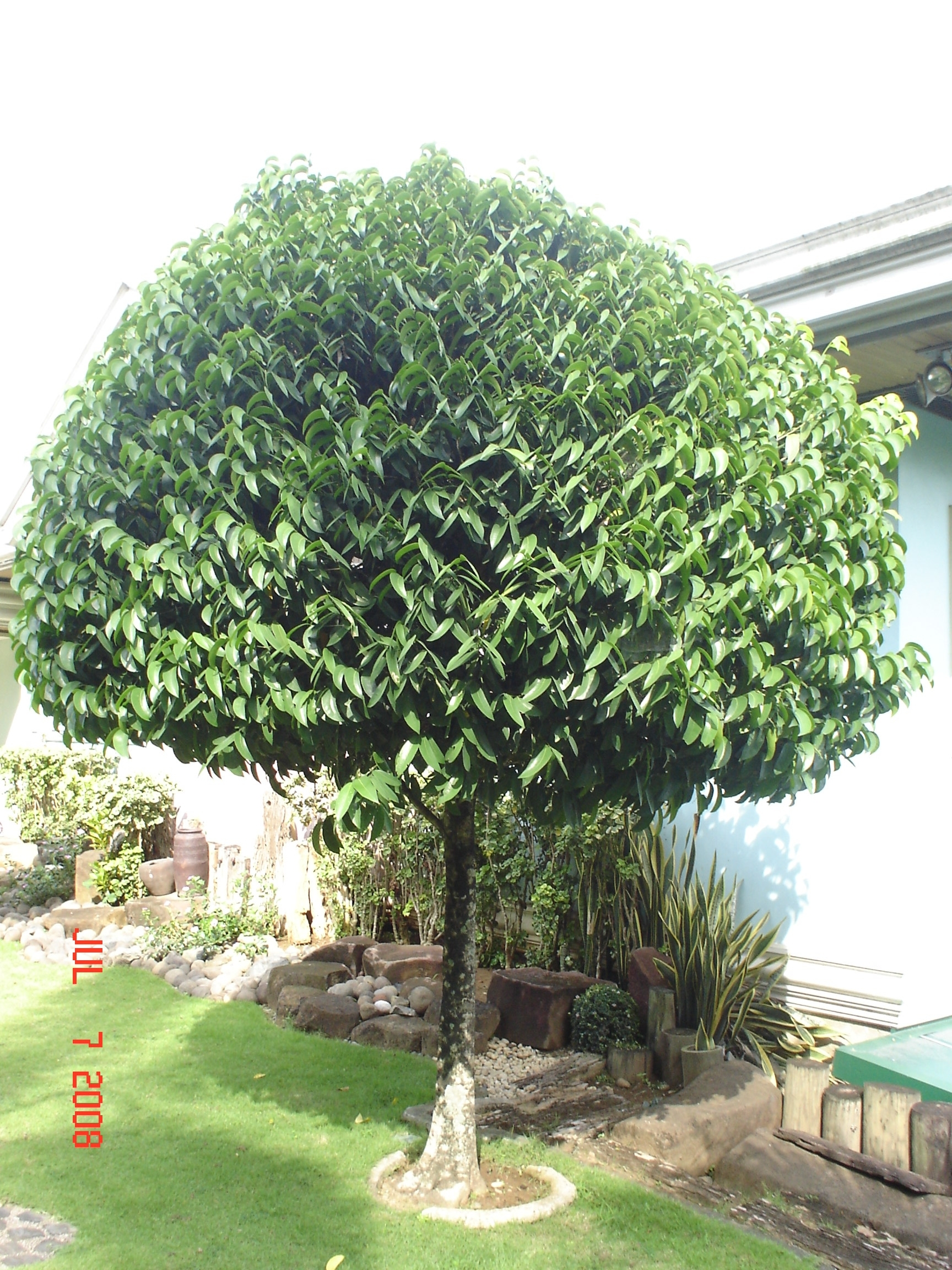 Maritima cainta plant nursery for Landscaping plants in the philippines