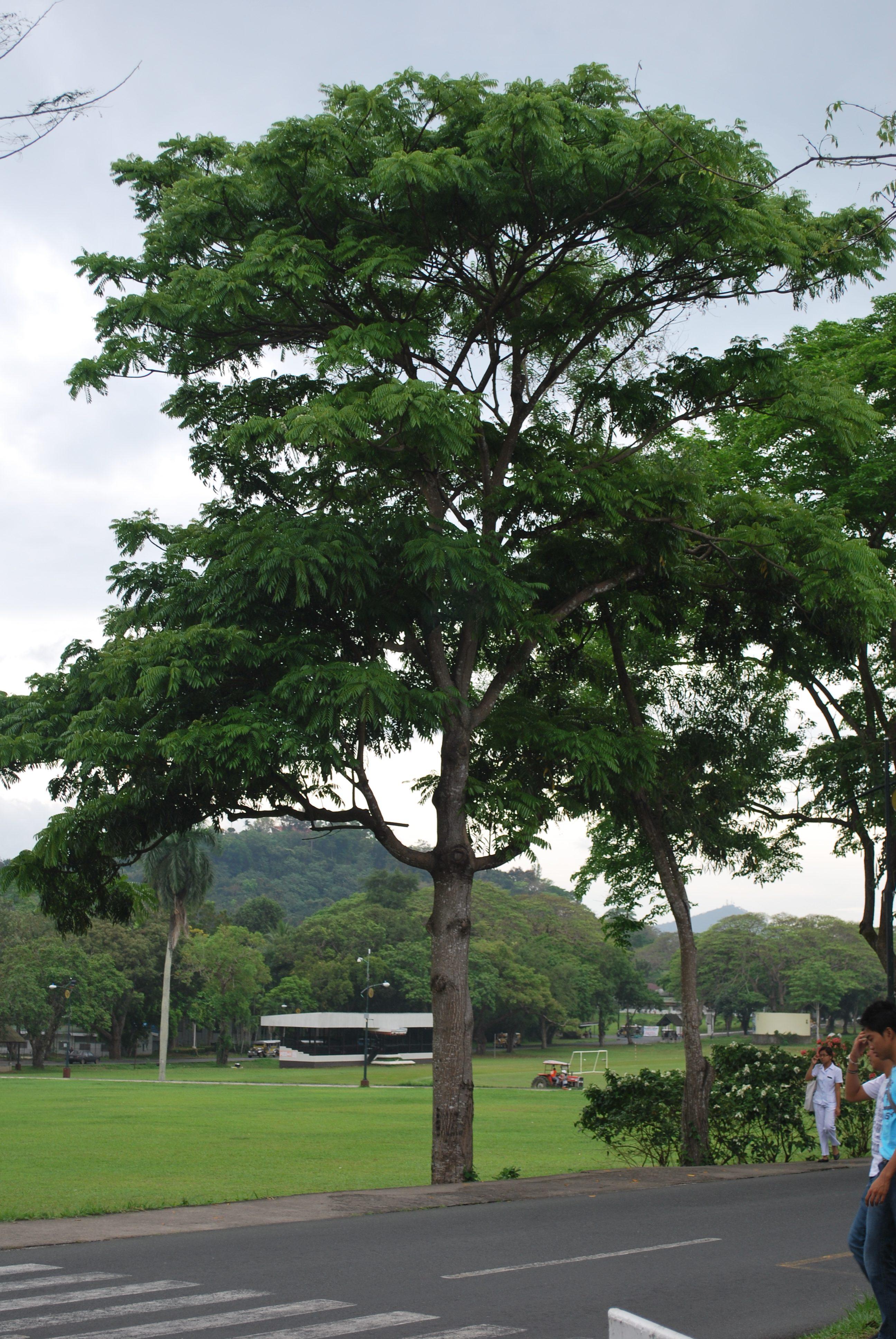 Amugis 5 Cainta Plant Nursery