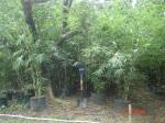 thailand bamboo 6