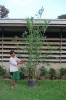 thailand bamboo 4