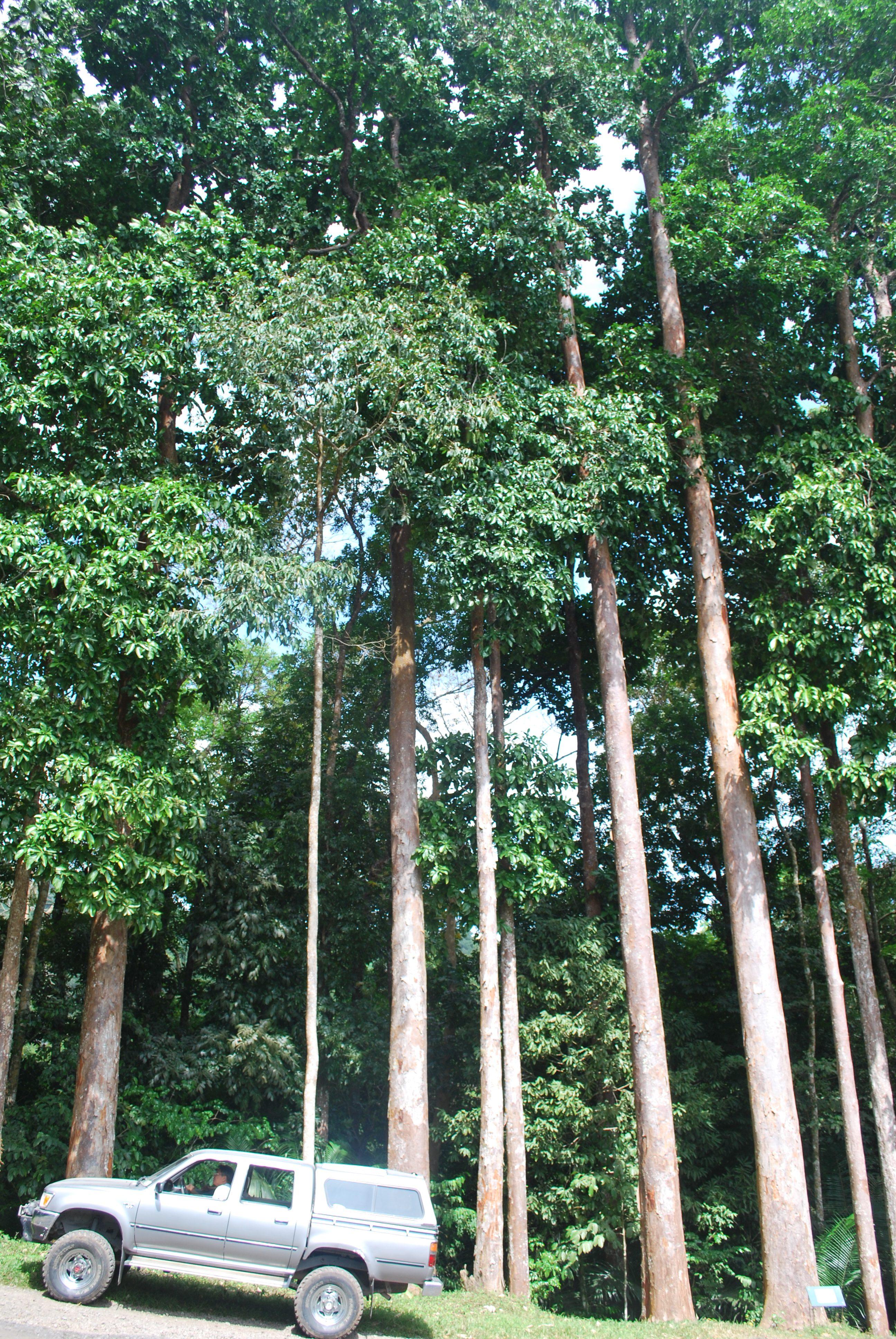 Mini Bamboo Plant