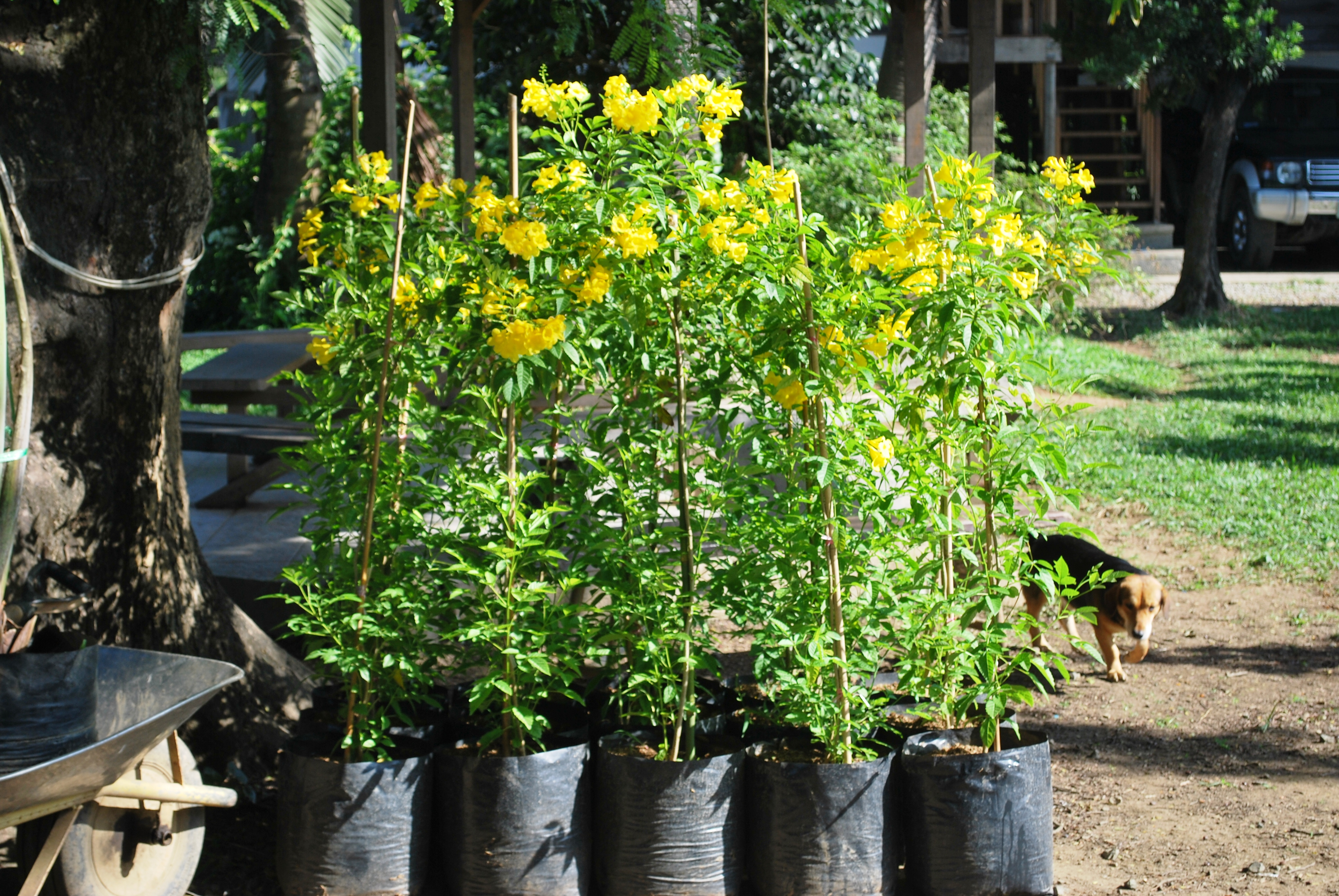 Cainta Plant Nursery For Your Tree Planting Projects Landscaping And Garden Needs