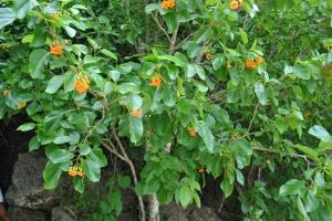 Balu Flowers (4)